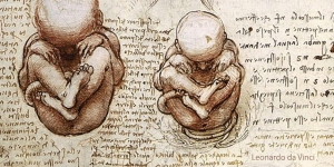 Views of a Fetus in the Womb, c. 1510-12, from a sketchbook by Leonardo da Vinci.