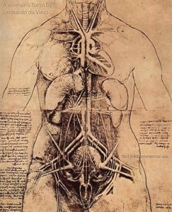 A woman's torso, ink drawing by Leonardo da Vinci, 1509-10.