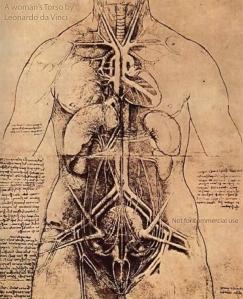 A woman's torso, ink drawing by Leonardo da Vinci, 1509-10.