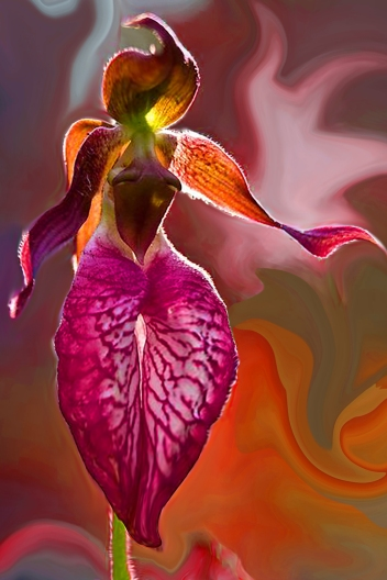 'Orchid in a frenzy', image created on Adobe Photoshop by Marina, inspired by descriptions of Jane Avril's exotic dance.